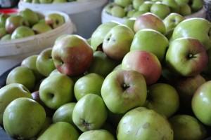 20130929-Appels-plukken-(130)
